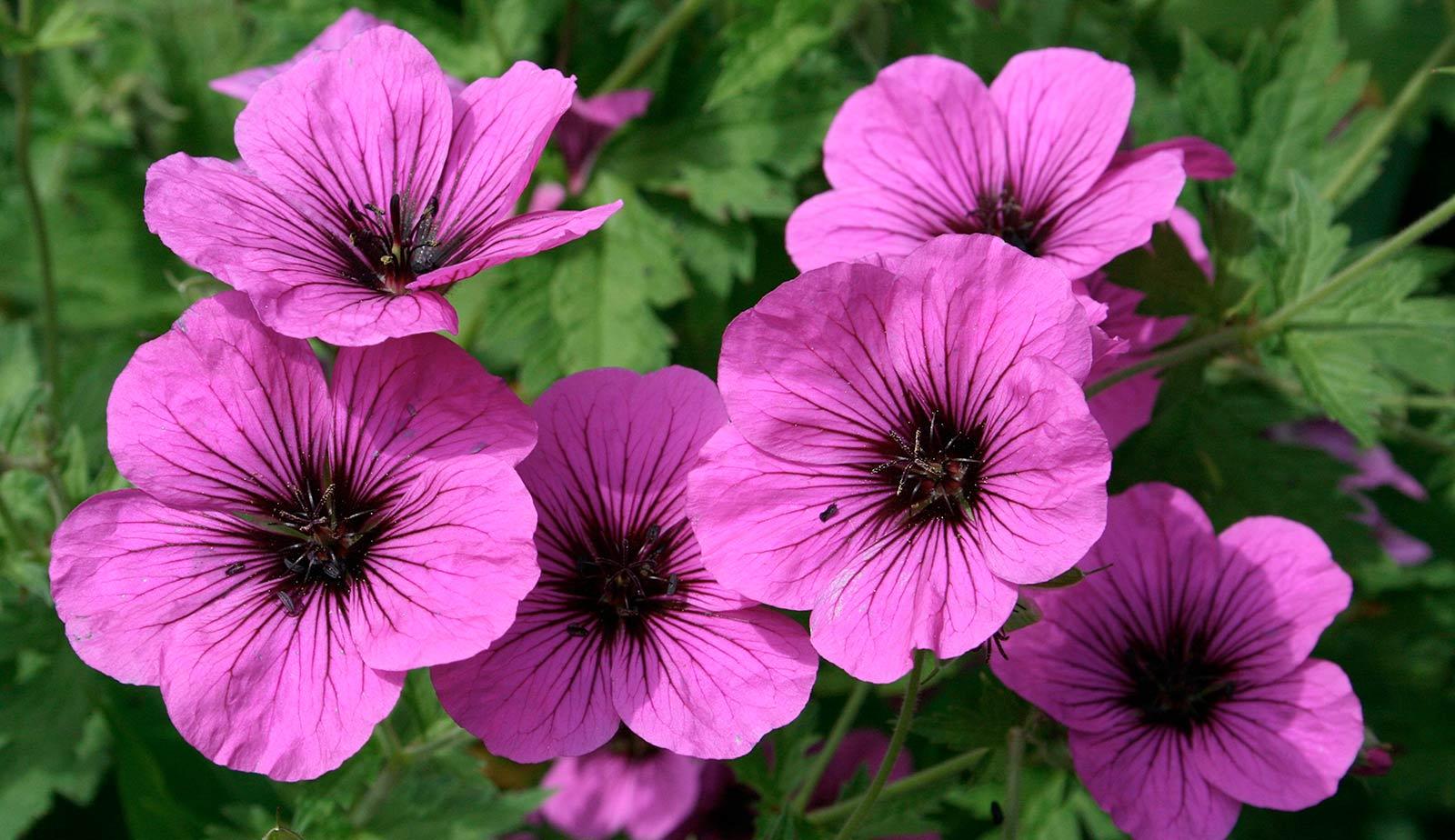fiori-da-balcone_O1